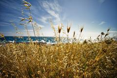 Italy, view of wild oat at ionean sea Stock Photos