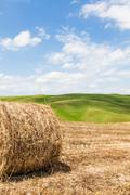 tuscany agriculture - stock photo