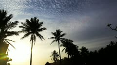 Shot of palm trees at dusk Stock Footage