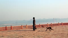 Pan shot of a man walking with a monkey Stock Footage