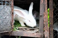A white fluffy bunny rabbit in a cage Stock Photos