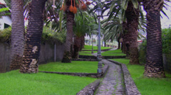 Quiet palm tree alley Stock Footage