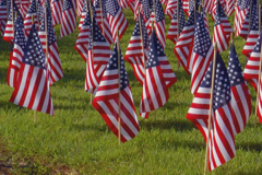 Large display of small American flags - stock footage