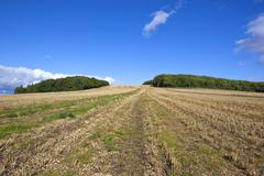 Stubble field with trees Stock Photos