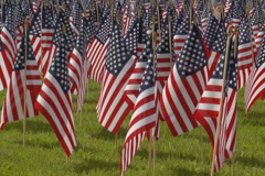 Cluster of small American flags. Stock Footage