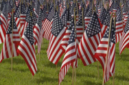 Stock Video Footage of Cluster of small American flags.