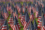 Stock Video Footage of Large number of small American flags.