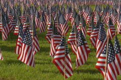 Display of many small American flags.  Early morning. Stock Footage