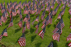 Large display of small American flags.  Early morning. - stock footage