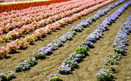 Stock Photo of row of colorful flowers with sunshine