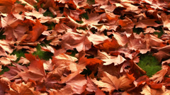 Autumn landscape in a park - cartoon style Stock Footage