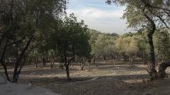 Hillside olive grove in Greece Stock Footage
