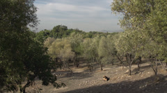 Hillside olive grove in Greece, #2 Stock Footage