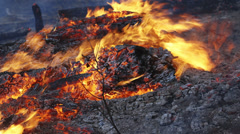 Forest Fire Close Up Burning Logs on the Ground Stock Footage