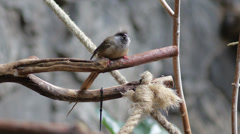Brown bird Stock Footage