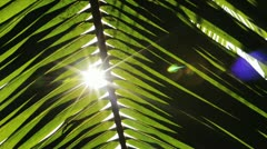 Shot of sunlight through palm frond Stock Footage