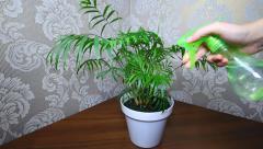 Hand Sprayed Plant By Spray Stock Footage