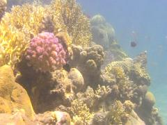 REEF3 Stock Footage