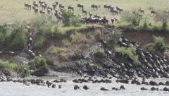 Wildebeest migration, safari, Masai Mara National Reserve, Kenya Stock Footage
