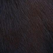 Horse hairy texture, fur Stock Photos