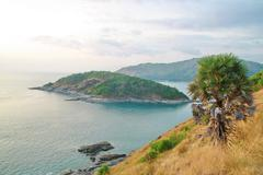 Palm tree, phromthep cape viewpoint with blue sky phuket,thailand Stock Photos