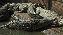 Crocodiles by river Stock Footage
