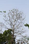 Trees in a forest, Jim Corbett National Park, Nainital, Uttarakhand, India - stock photo
