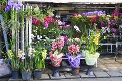 orchid shop - stock photo