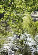 Pond in a park, St Stephen's Green, Dublin, Republic of Ireland - stock photo