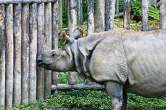 Stock Photo of asiatic rhinoceros, thailand