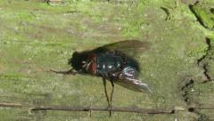 Wildlife Fly sitting on some wood Stock Footage