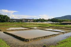 water in start agriculture rice field, thailand - stock photo