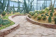 Walkway and cactus garden Stock Photos