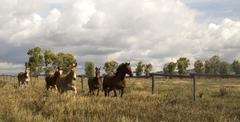Wild animal horses stampede running along fence senses aware Stock Photos