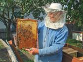 Stock Photo of on an apiary