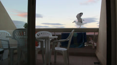 French holiday 2 (balcony & seagull) Stock Footage