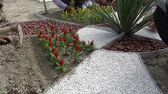 Workers planting in public garden, Bukhara, Uzbekistan Stock Footage