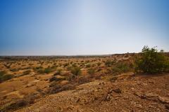 Bush growing at arid landscape, Jaisalmer, Rajasthan, India - stock photo