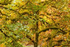 Green tree moss, colorful fall autumn leaves multnomah falls columbia river g Stock Photos