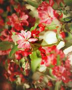 grungy floral backgrounds  with very shallow focus for your design - stock photo