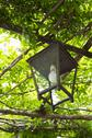 Stock Photo of Lantern hanging on a tree, Ravello, Amalfi Coast, Salerno, Campania, Italy