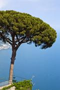 Stock Photo of Tree at the coast, Ravello, Amalfi Coast, Salerno, Campania, Italy
