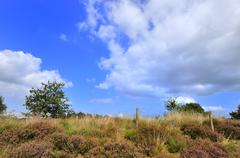 Stock Photo of heather with blue sky