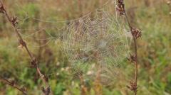 spiderweb - stock footage