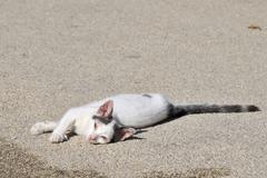 Diseased greek cat Stock Photos