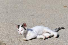 diseased greek cat - stock photo