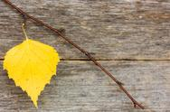 Stock Photo of branch with yellow leaf on the wooden background