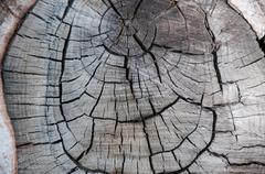 texture the annual rings on a cut of a tree - stock photo
