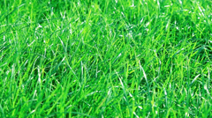Green grass wavers in the wind Stock Footage
