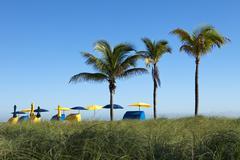 Palm trees with umbrellas Stock Photos